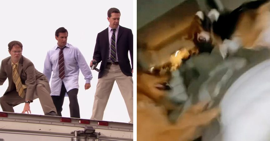 The Office parkour scene audio and sound was used in a video of three dogs going crazy in a living room.