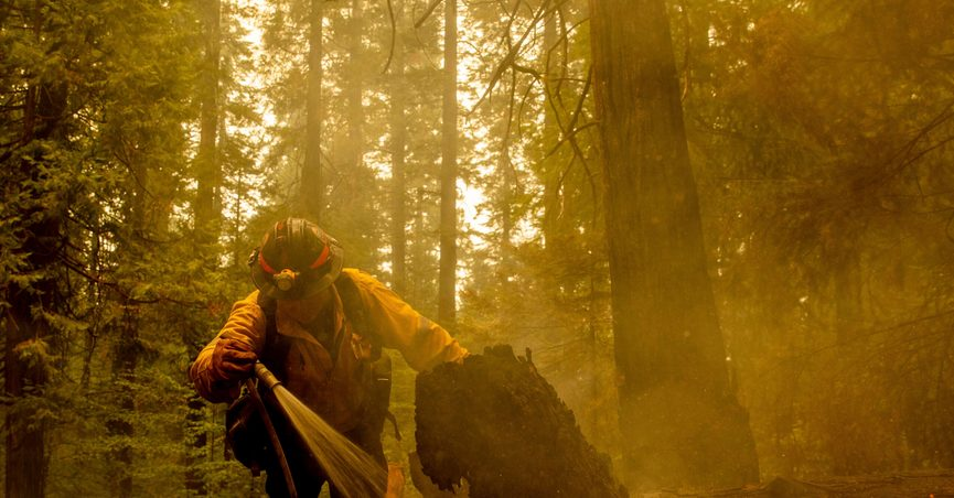 Central Calaveras firefighter Ryan Carpenter extinguishes flames from the Caldor Fire on Hazel Valley Road east of Riverton, Calif., on Thursday, Aug. 19, 2021. (AP Photo/Ethan Swope)