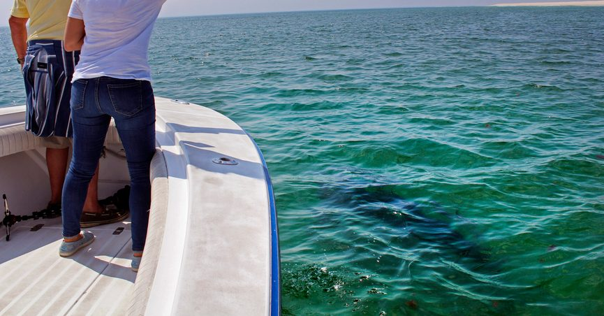 Michael Simard, left, and Penny Antoglou point out as a great white shark swims past while on shark watch with Dragonfly Sportfishing charters off the Massachusetts' coast of Cape Cod, on Friday, Aug. 13, 2021. Cape Cod is slowly embracing its shark reputation, three summers after the popular vacation destination saw its first great white shark attacks in generations. A growing group of charter boat operators are offering shark tours to complement the region's whale and seal watching excursions. (AP Photo/Phil Marcelo)
