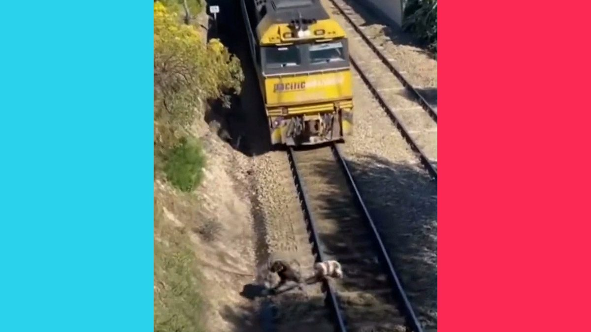 TikTok Video of Dog Rescued from Train Tracks Was Faked - snopes
