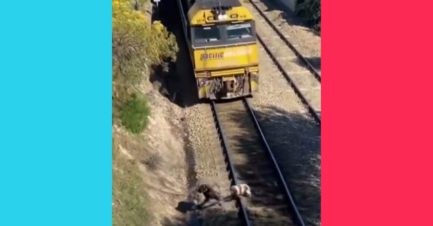 A TikTok video was posted that showed a man rescuing a dog tied to railroad tracks the instant before a train would have hit both of them.