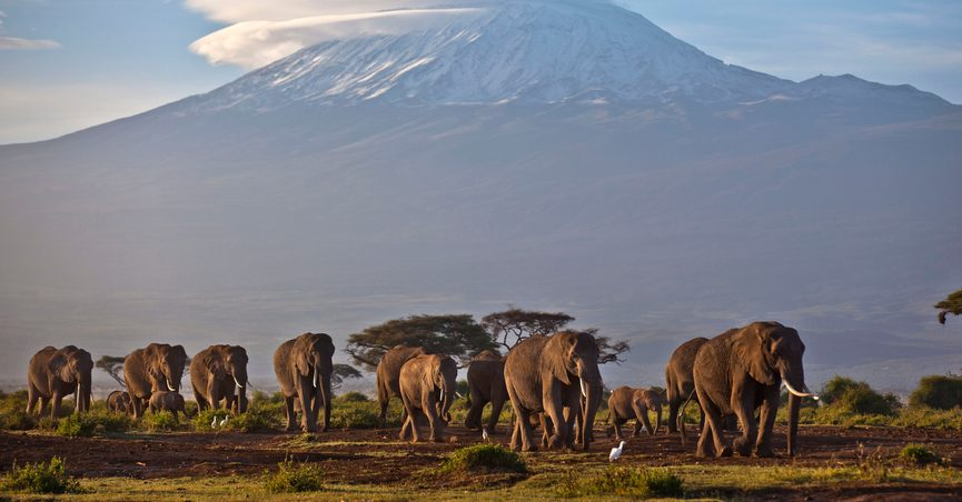 FILE - In this Monday, Dec. 17, 2012 file photo, a herd of adult and baby elephants walks in the dawn light as the highest mountain in Africa, Mount Kilimanjaro in Tanzania, sits topped with snow in the background, seen from Amboseli National Park in southern Kenya. Africa's rare glaciers will disappear in the next two decades because of climate change, a new report warned Tuesday, Oct. 19, 2021 amid sweeping forecasts of pain for the continent that contributes least to global warming but will suffer from it most. (AP Photo/Ben Curtis, File)