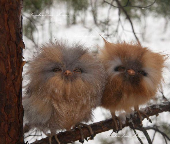 Two Cute Owlets
