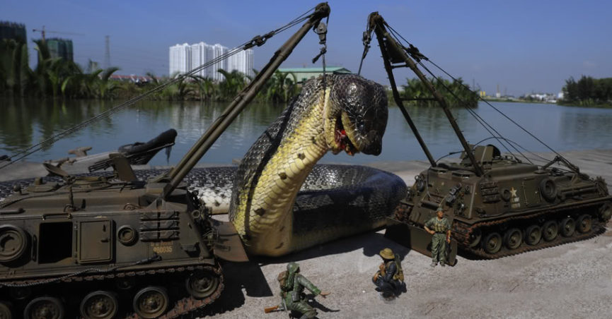Fact Check Was The World S Largest Snake Captured In The Amazon
