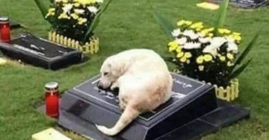 Did This Dog Sleep by His Master's Grave Every Night for 7 Years?